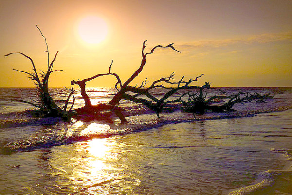 AWESOME secret island in the U.S. - Driftwood Beach at sunset