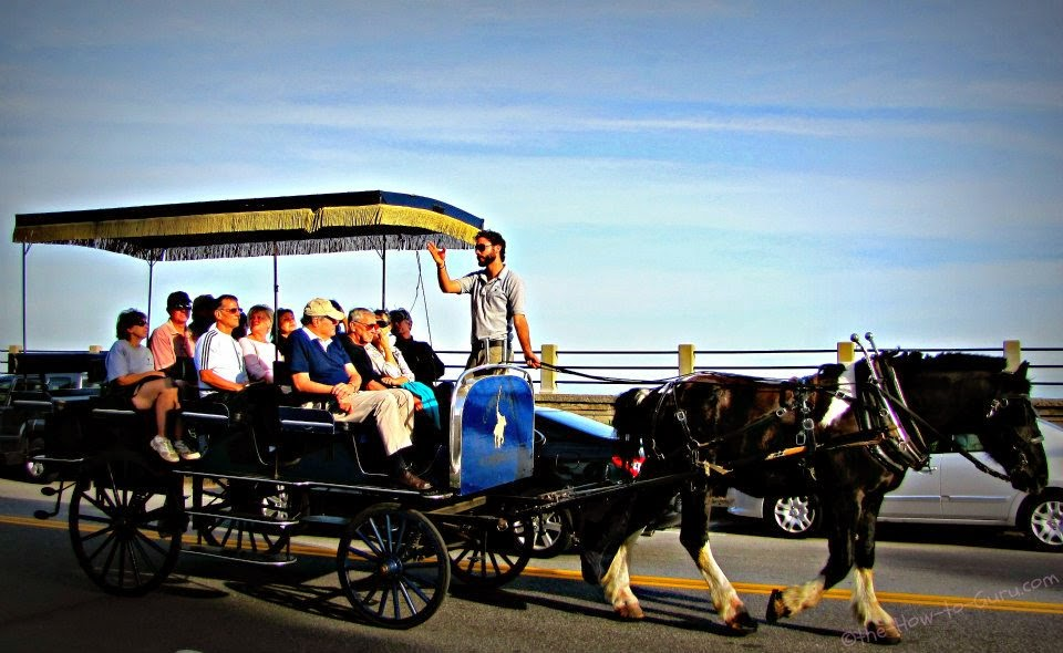 view of one of the Charleston Carriage Tours