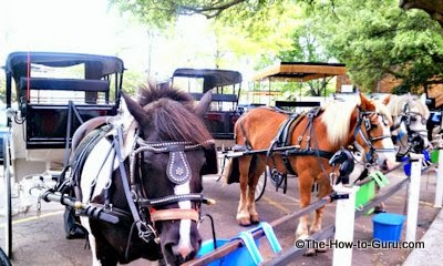 charleston sc horses