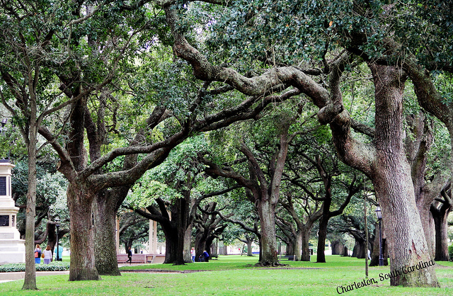 AMAZING Things to Do in Charleston for Families!