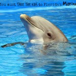 Top 7 Reasons For A Family Travel Vacation To Marineland Dolphin Adventure