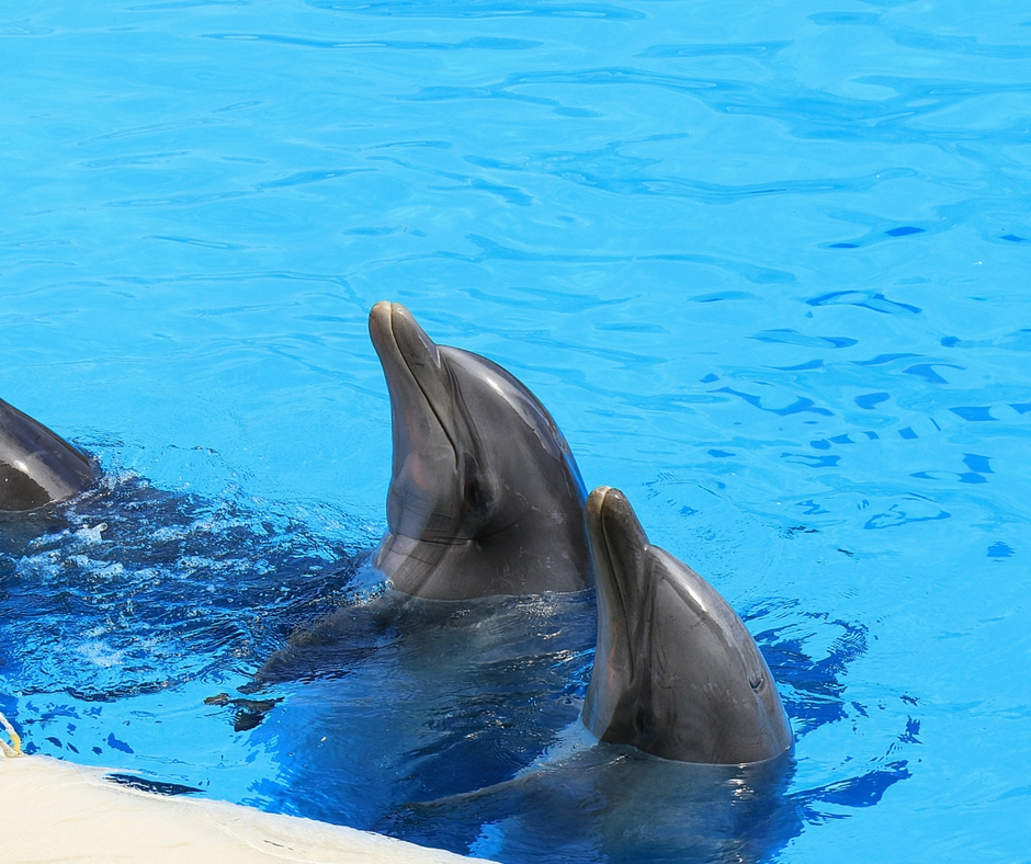 7 Reasons why Marineland Florida's Dolphin Encounter is one that your family can't miss: Dolphins!