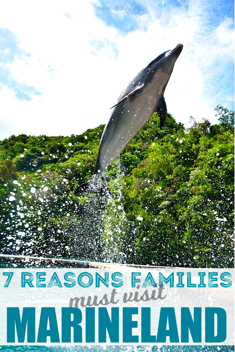 7 Reasons why Marineland Florida's Dolphin Encounter is one that your family can't miss.