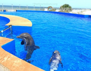 7 Reasons For A Family Travel Vacation To Marineland This Year!