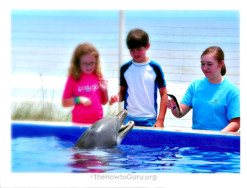 WONDERFUL Dolphin encounter at Marineland Florida