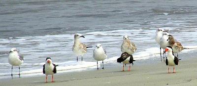 image of jekyll island georgia birds on the beach