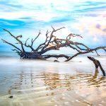 view of Jekyll Island Eerie Driftwood Beach