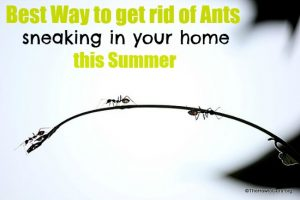 Best Way To Get Rid Of Ants:  Wife Edition