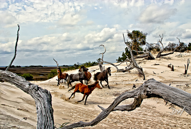 view of Cumberland Island wild horses on the sand as a road trip idea in the south
