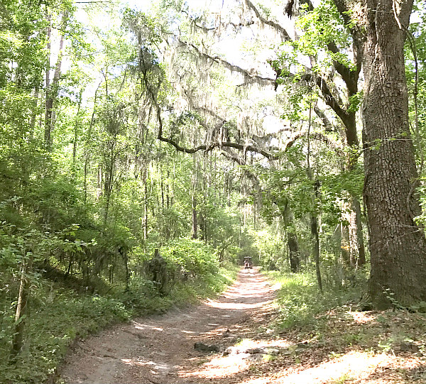 Florida campground family adventure Review - Suwannee River trails