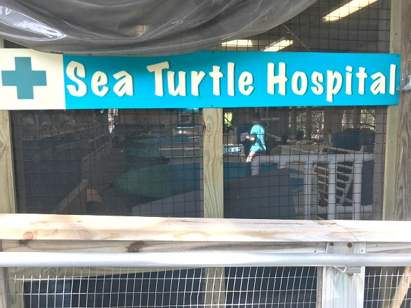 Sea Turtle Hospital Sign on RV Vacation