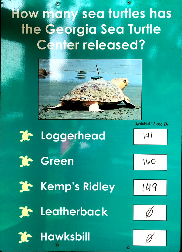 Stats poster for Georgia Sea Turtle Center on RV Vacation