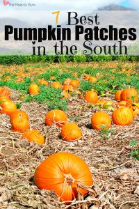 Don't Miss The South's Best Pumpkin Patches & Corn Mazes