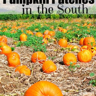 BEST Pumpkin Patches in the South List!