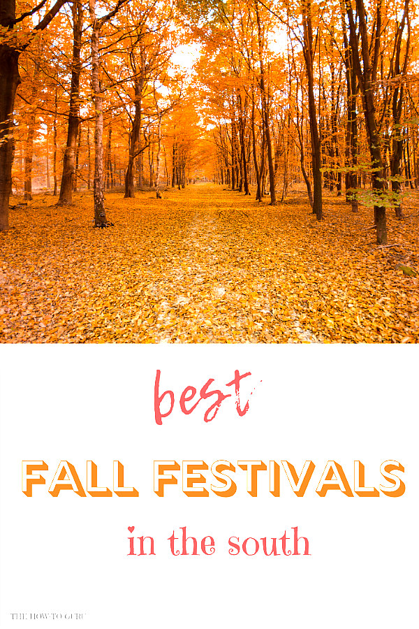 view of Fall forest for fall festivals near me and you