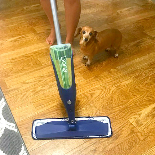 close up of bona mop, floor, and dog in How to clean laminate floors