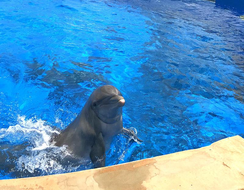 Visit Marineland Dolphin Adventure - 80th Anniversary Celebration