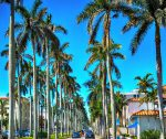 Seven best things to do in West Palm Beach - tree lined Worth Avenue Shops