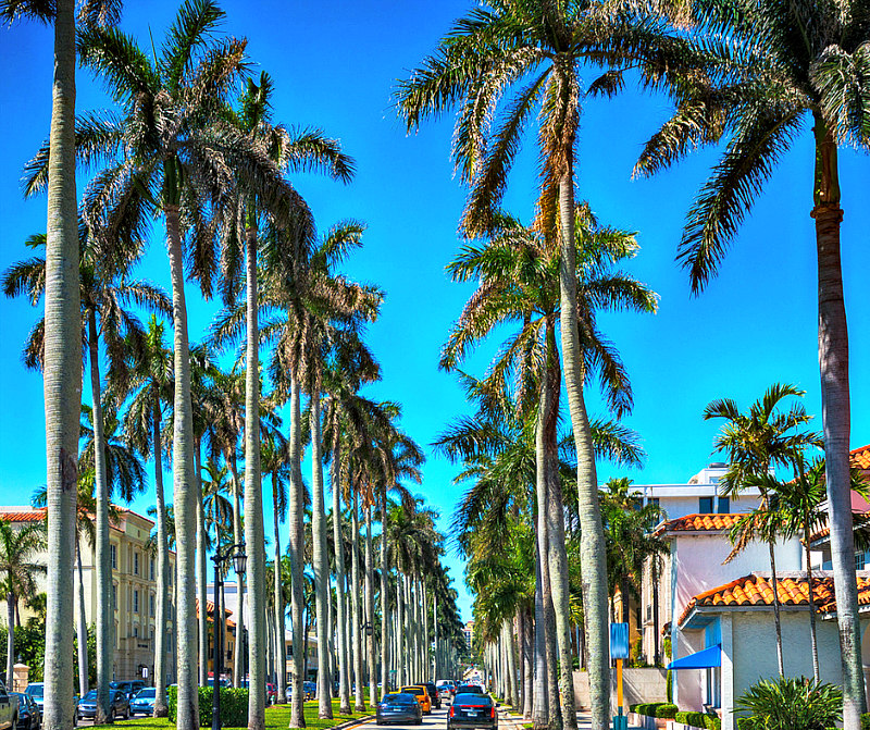 view of Palm tree lined Worth Avenue - best things to do in West Palm Beach Florida for families