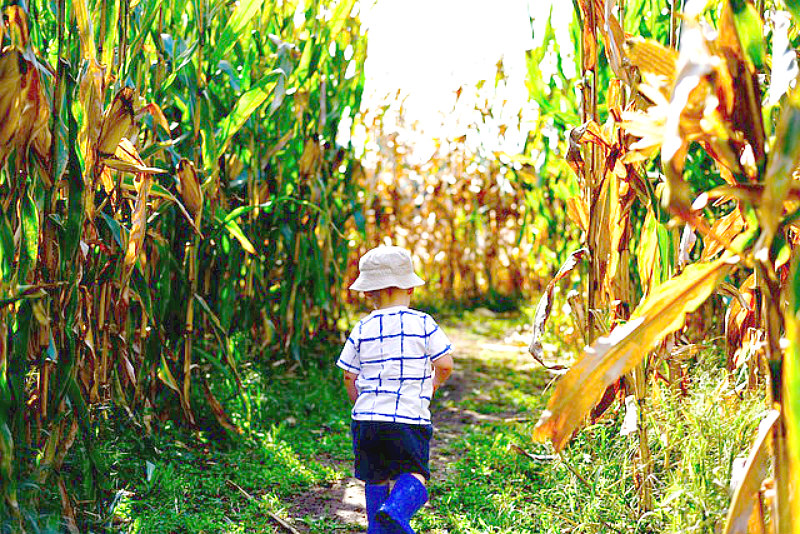 Best Weekend Getaways for fall foliage overload, dreamy drives, & fairy tale hiking trails - North Carolina Corn Maze