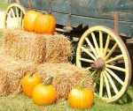 Best Festivals Near Me & You this Fall - pumpkins and wagon