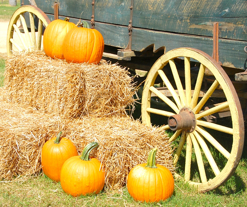 BEST Pumpkin Patches, Fairs, & Festivals Near Me & You this Fall of things to do this October and November! Pumpkins & Wagon