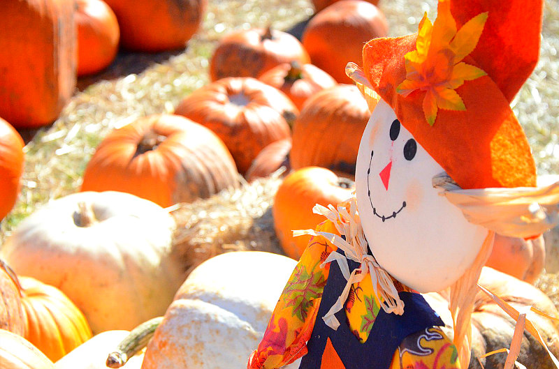 Best Weekend Getaways for fall foliage overload, dreamy drives, & fairy tale hiking trails - Florida Fall Festival
