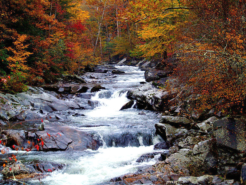 Best Weekend Getaways for fall foliage overload, dreamy drives, & fairy tale hiking trails - Tennessee Fall Colors