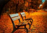 fall park benches with leaves for best places to visit in October