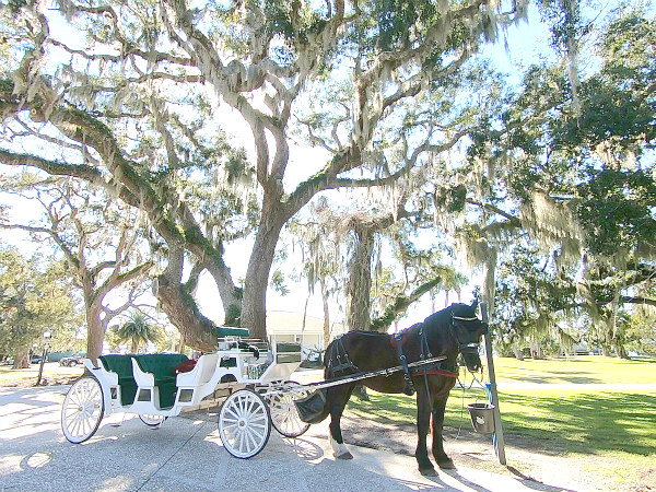 view of horse and carriage outside of Jekyll Island Club