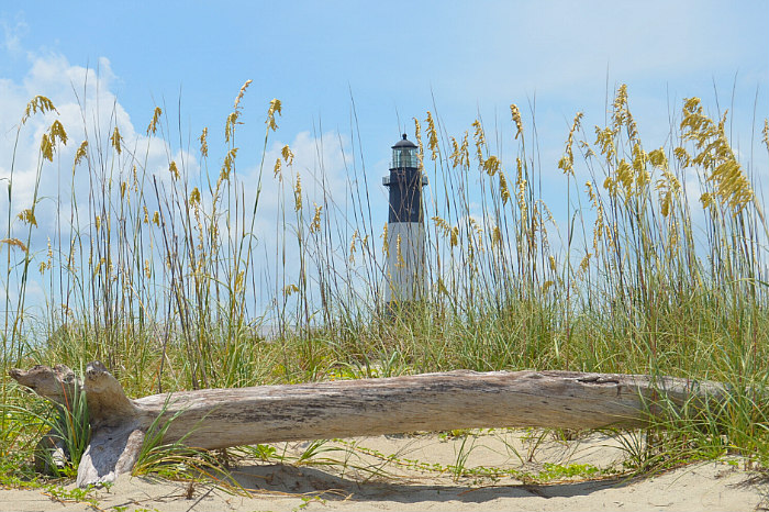 driftwood on Tybee Island Beach with sea oats and Tybee Island Lighthouse in distance