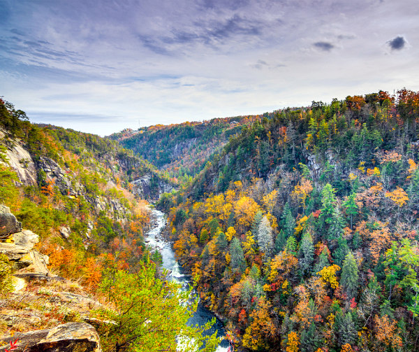 colorful fall view of treetops and Tallulah Gorge